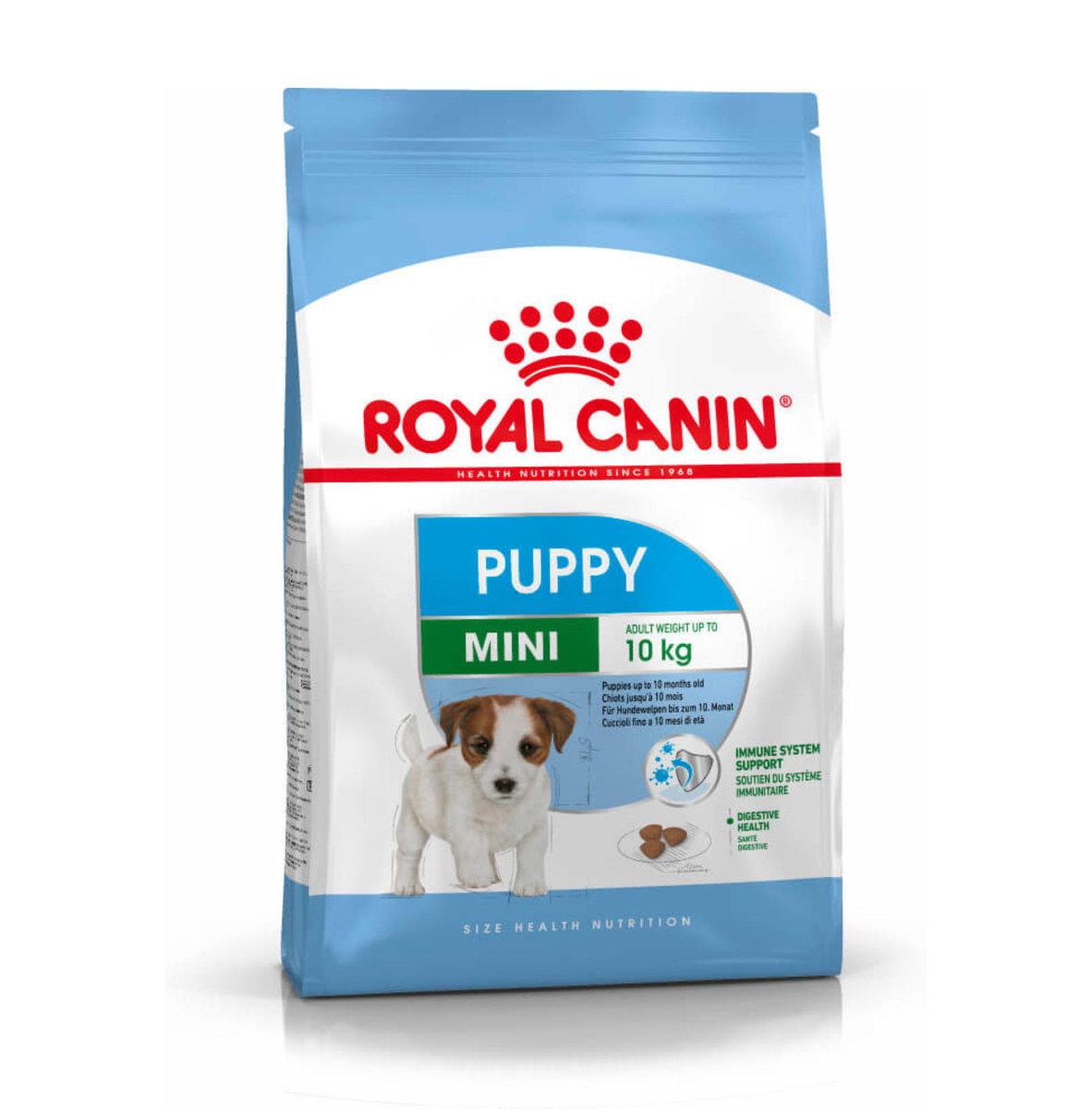 Mini Puppy 小型狗幼犬 4kg