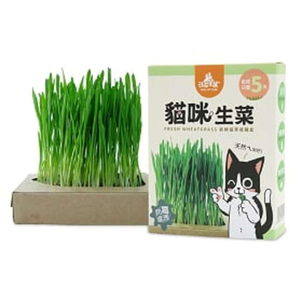 貓草新鮮栽培盒 (貓咪生菜) 65g