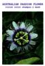 澳洲西番蓮專業染髮鎖色修護髮膜-紫色
