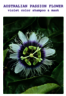 Everline Color Shampoo Australian Passion Flower - Violet Color