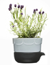 Lavender double-barelled growing pot