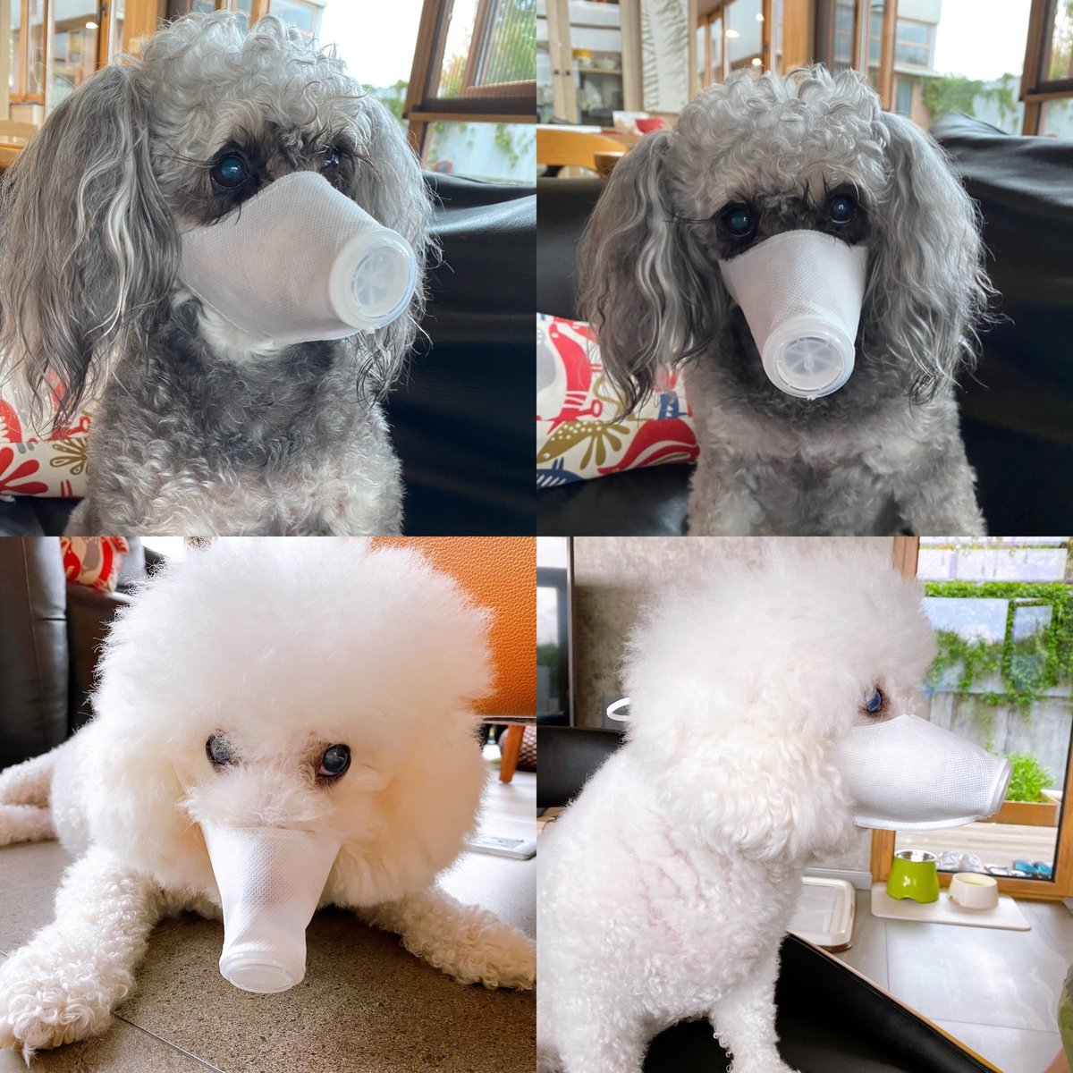Doggie Mask x 3pcs (M)