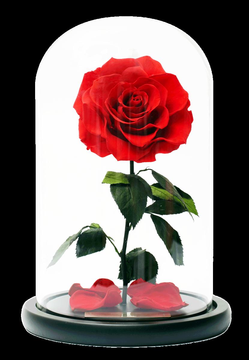 Le Fiori Preserved Rose