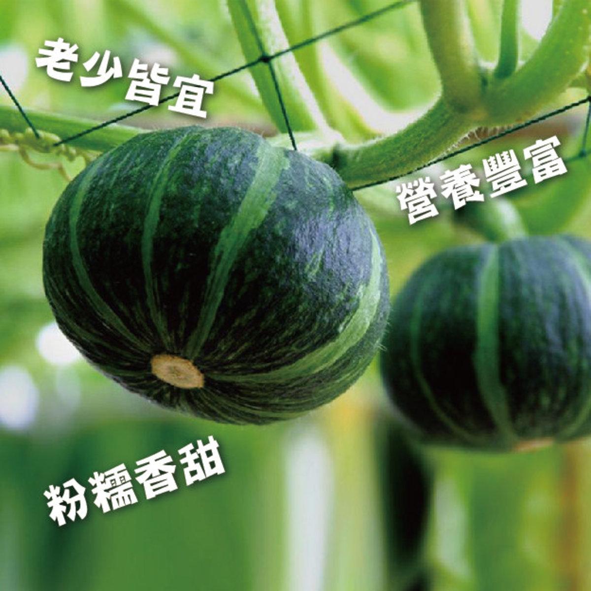 (溫室培植) 珍品青貝貝 (2個/約450-600G)