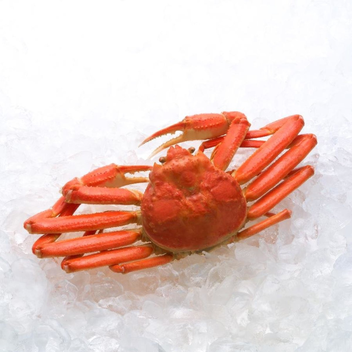 Frozen Cooked Whole Snow Crab 500g