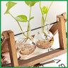 Glass Bulb Vase Set with Wooden Stand