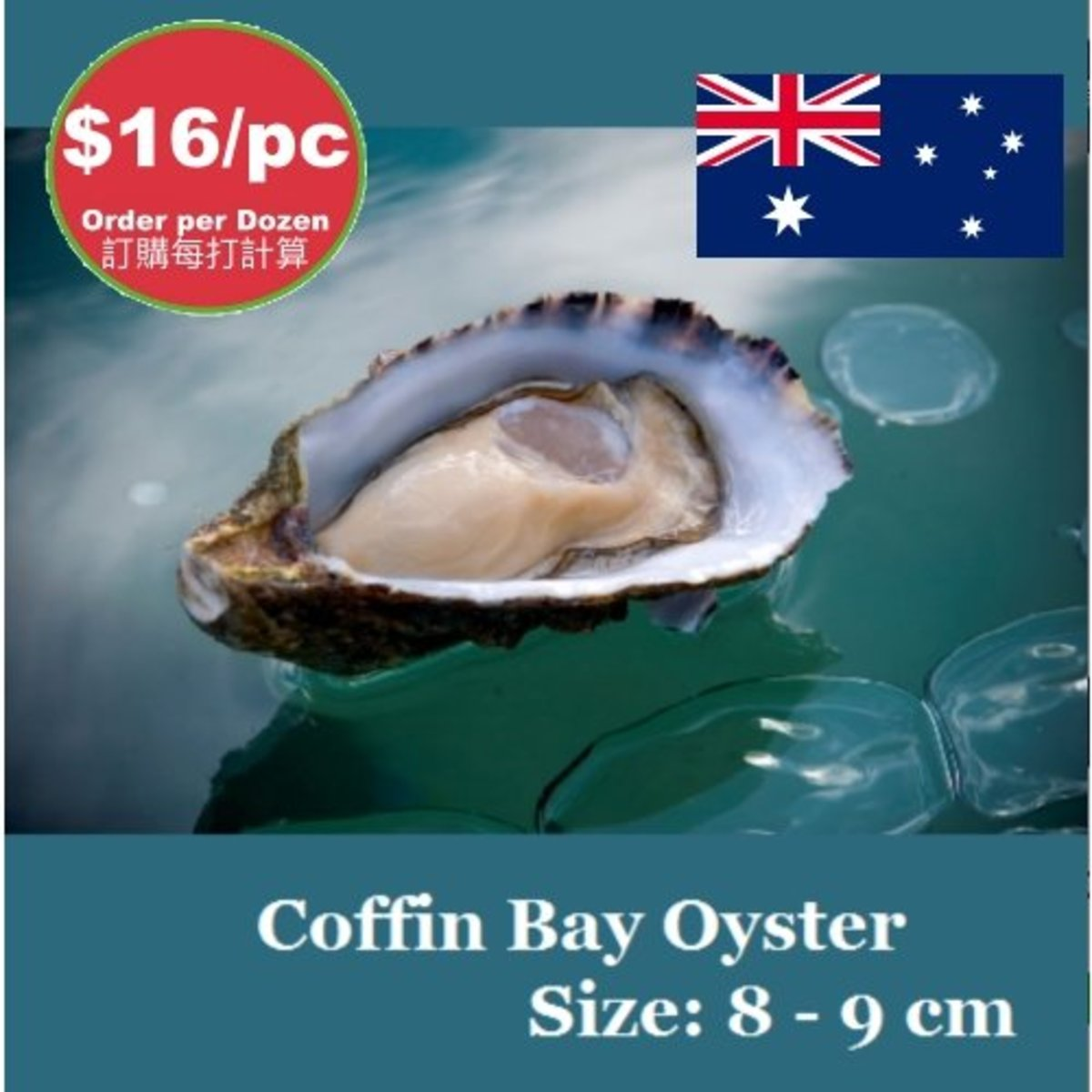 8-9 cm length Australian Coffin Bay Live Oyster, price is for 12 pcs.