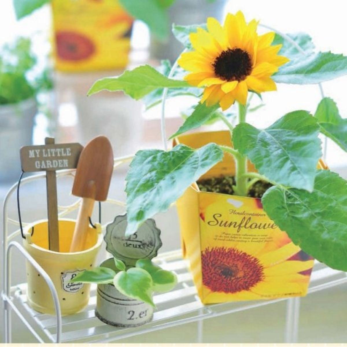 GD-434 Floral Container Smile Sunflower