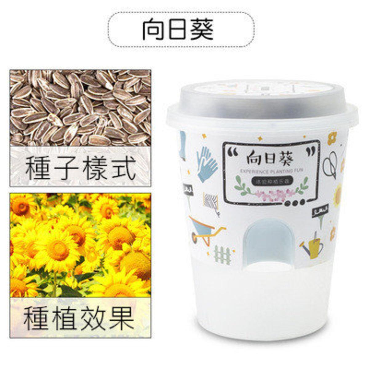 種植小盆栽 - 向日葵