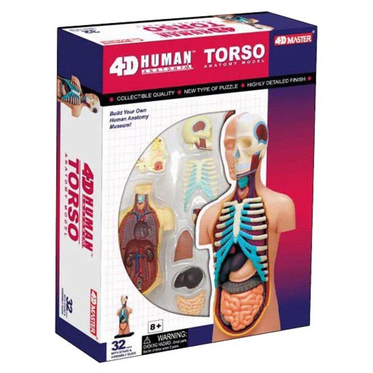 人體解剖模型-5吋小人體
